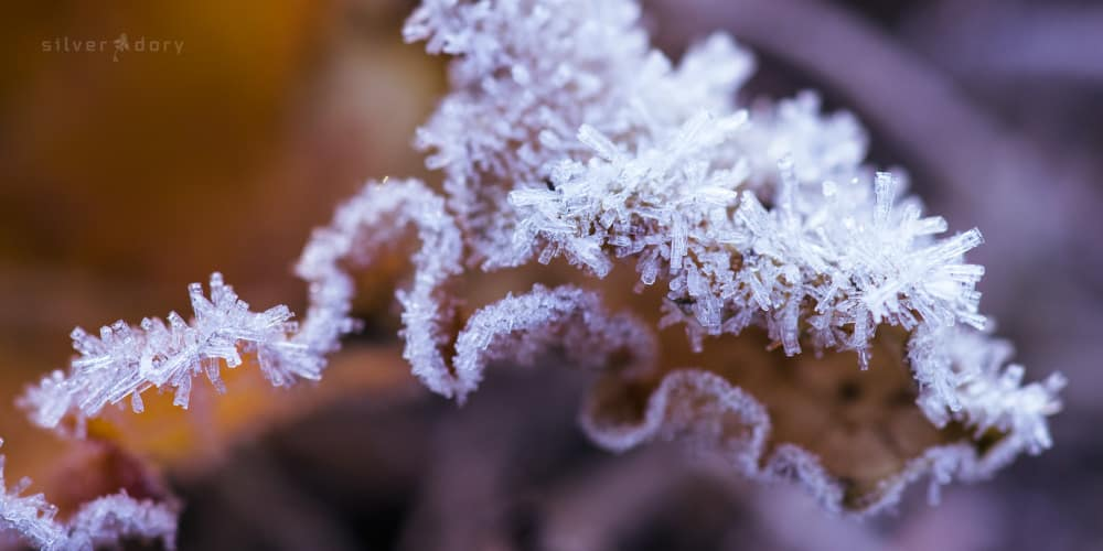 frost - crust