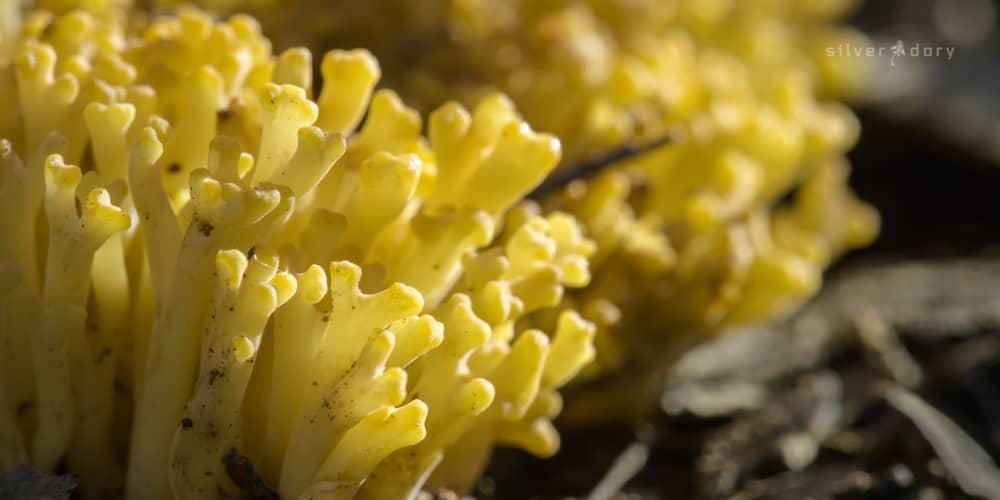 crust | fungi