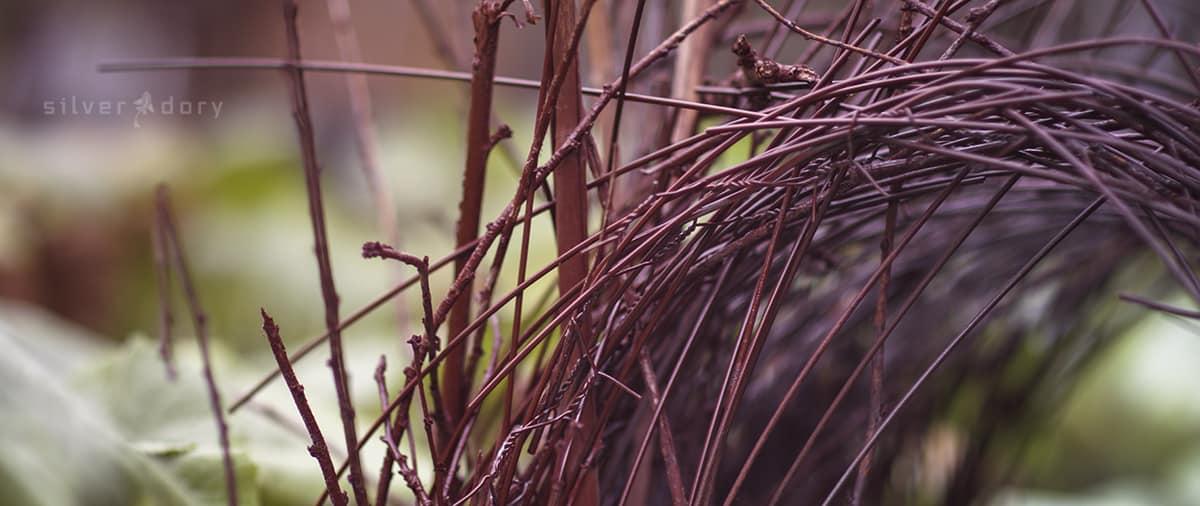 botanical art | Natalie Maras| Natalie Maras