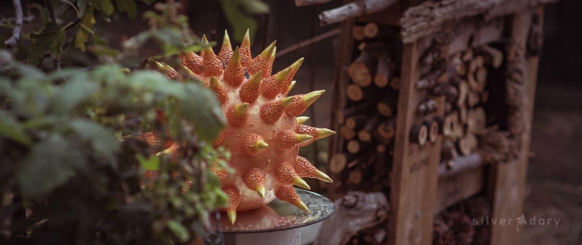 botanical art | Natalie Maras