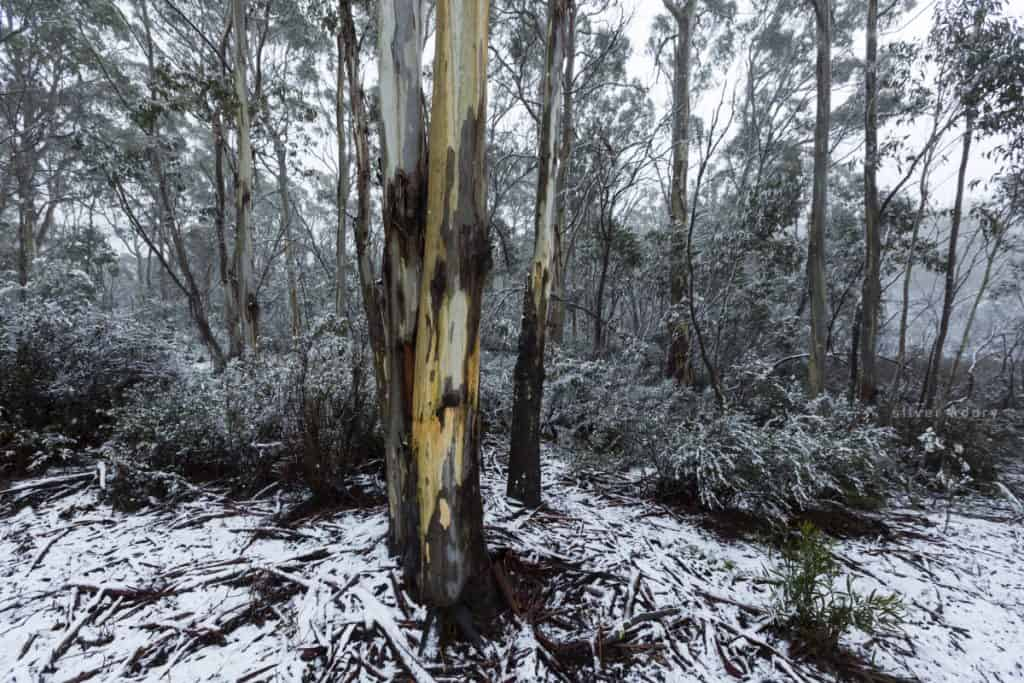 light snow - Namadgi National Park