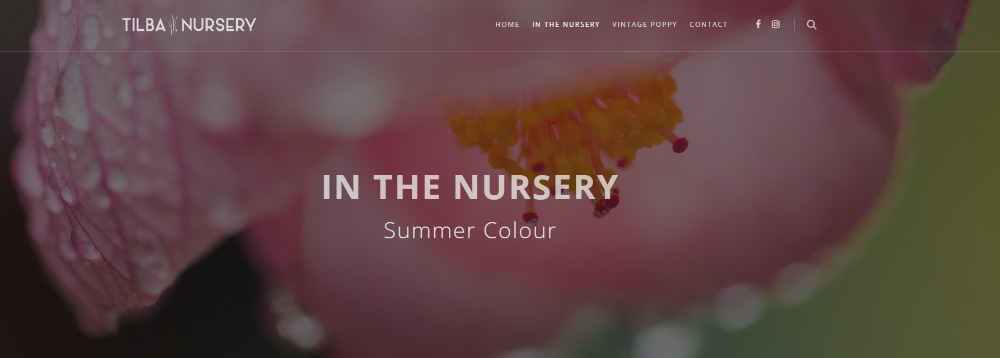 Tilba Nursery | Summer Colour
