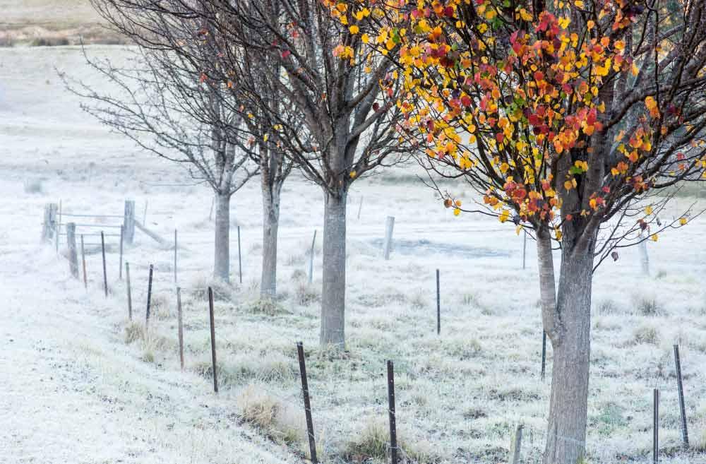 frost | Tilba NSW